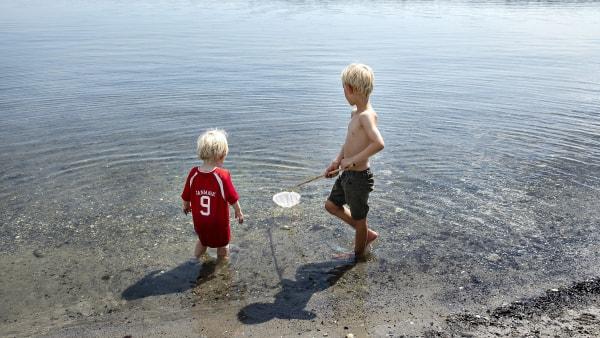 Mariager Fjord: Omfanget bekymrer ikke i år
