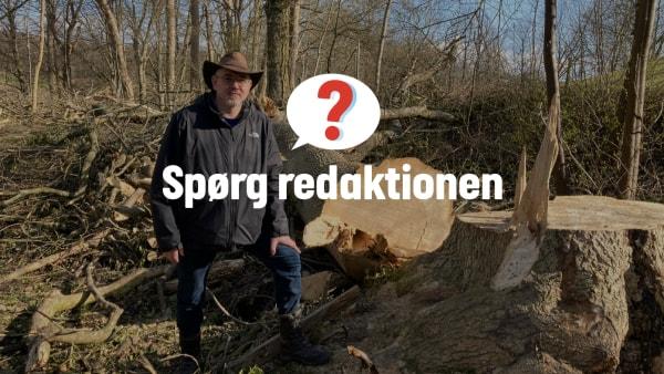 Træmassakre ved spejderhytte og populær sti vækker undren: - Fem ud af seks træer er måske lige voldsomt nok